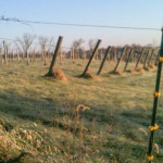 Horseshoe-Bend-Vineyard-&-Winery-07