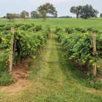 Rising-Sons-Home-Farm-Winery-15
