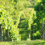 Rose-Hill-Farm-Winery-04