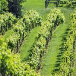 Rose-Hill-Farm-Winery-05