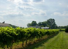 kentucky_winery