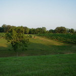 Seven Wells Winery vineyard