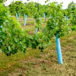 Generation-Hill-Winery-05