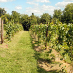 Cave-Valley-Winery-09