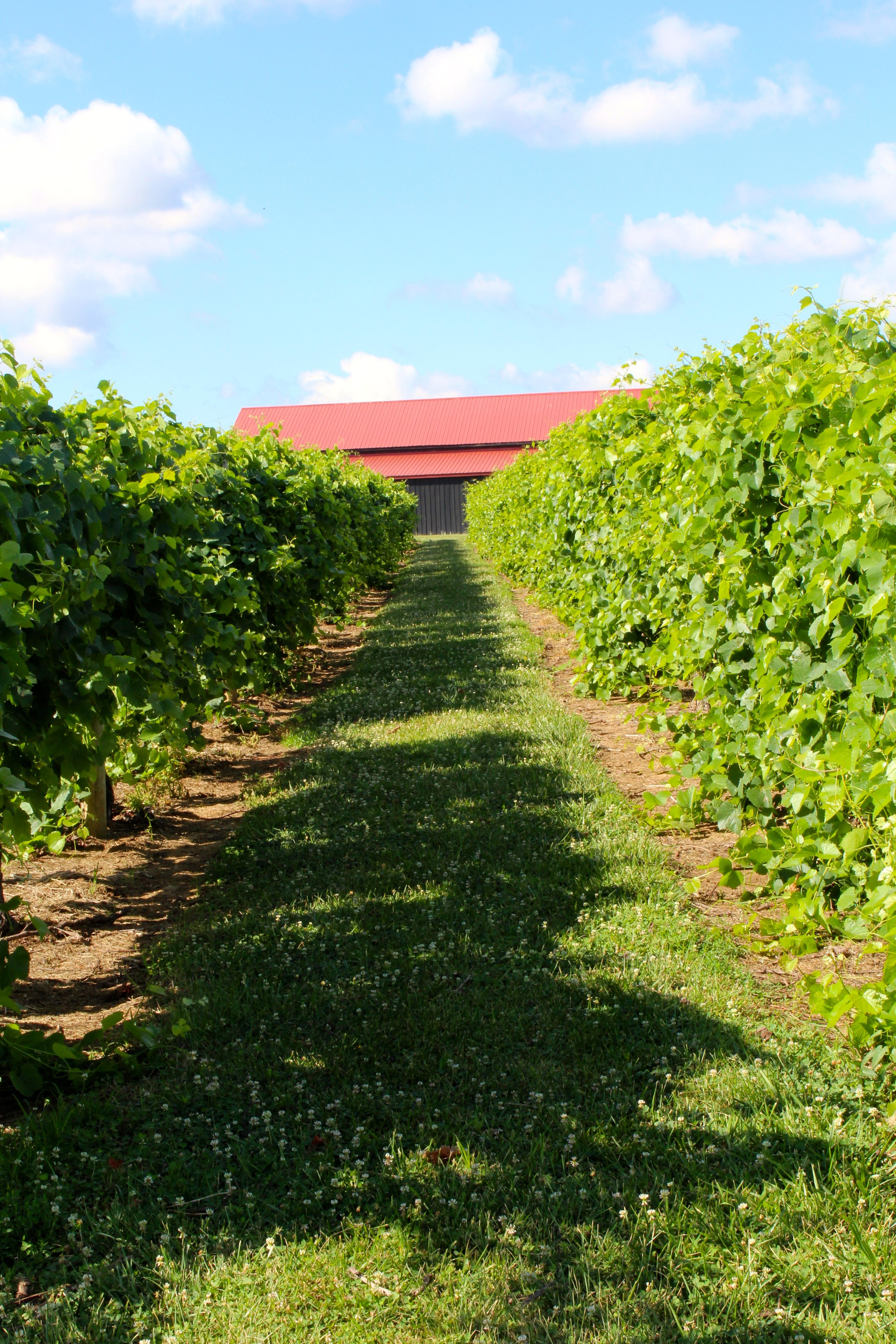 Talon Winery Amp Vineyards Kentucky Wine