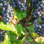Purple-Toad-Winery-04
