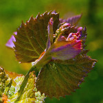 Purple-Toad-Winery-18