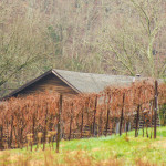 Up-the-Creek-Winery-01