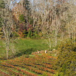 Up-the-Creek-Winery-03