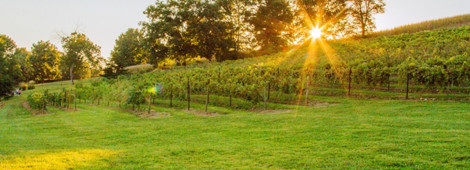 Cave-Hill-Winery-01